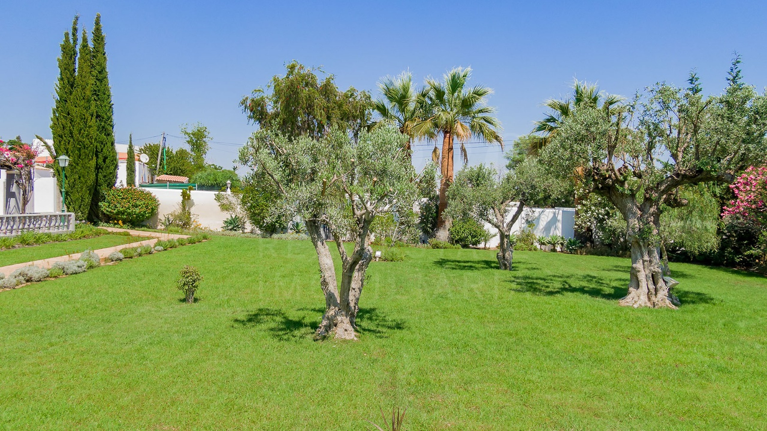 Garden with olive trees and grass